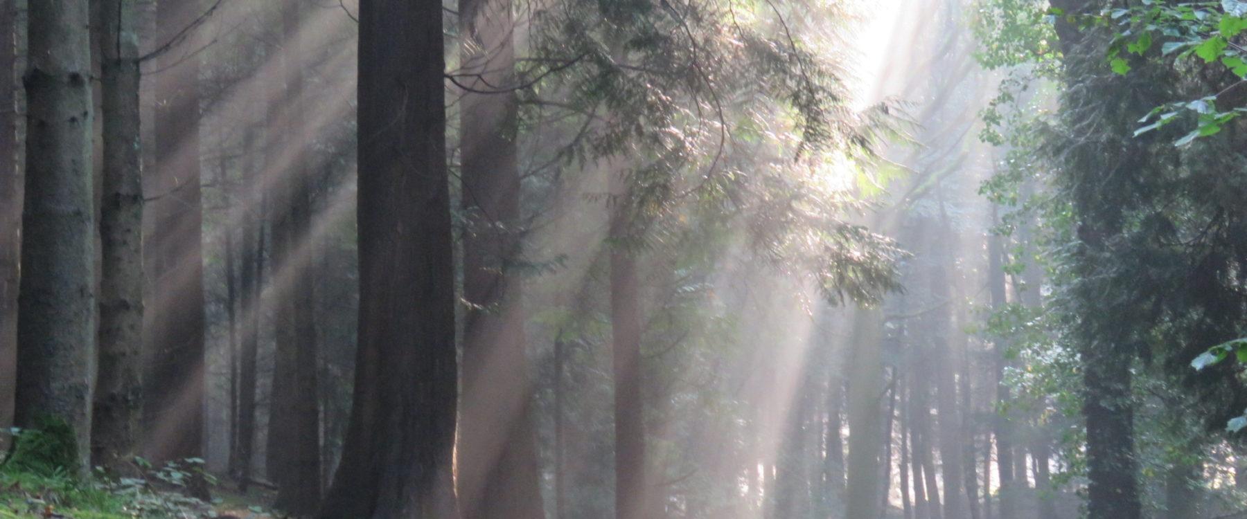 Oaker Wood